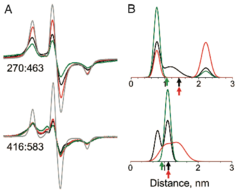 Actin-binding Cleft Closure In Myosin II Probed By Site-Directed Spin Labeling And Pulsed EPR.